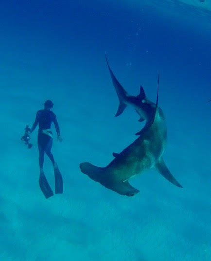 Media Manager Eugene Kitsios below the great hammerhead Amphitrite