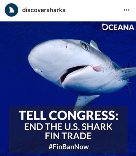 End the U.S. Shark Fin Trade
