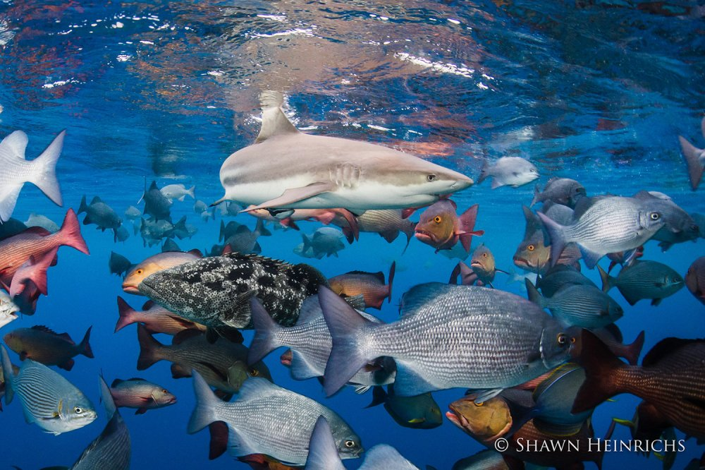 Shawn Heinrichs Photo