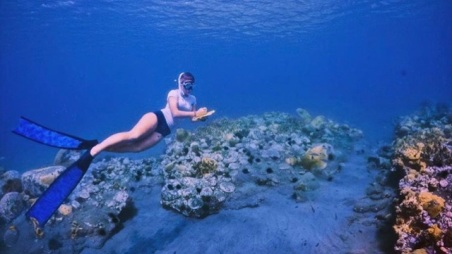 Anne Marie - Coral Reef Survey