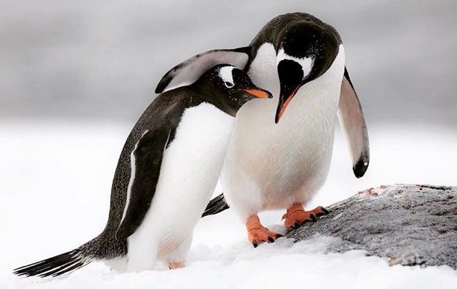 Megan McCubbin Photo - Antarctica
