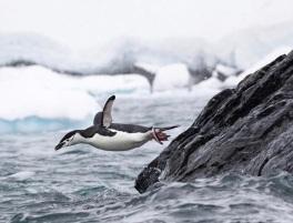 Megan McCubbin Photo - Penguins